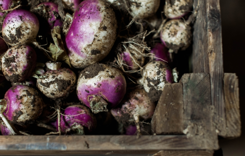 The beauty of fresh turnips from Peaper Brothers in Indianapolis.
