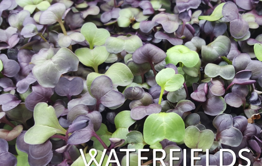Waterfields Introduces Volume Line of Microgreens