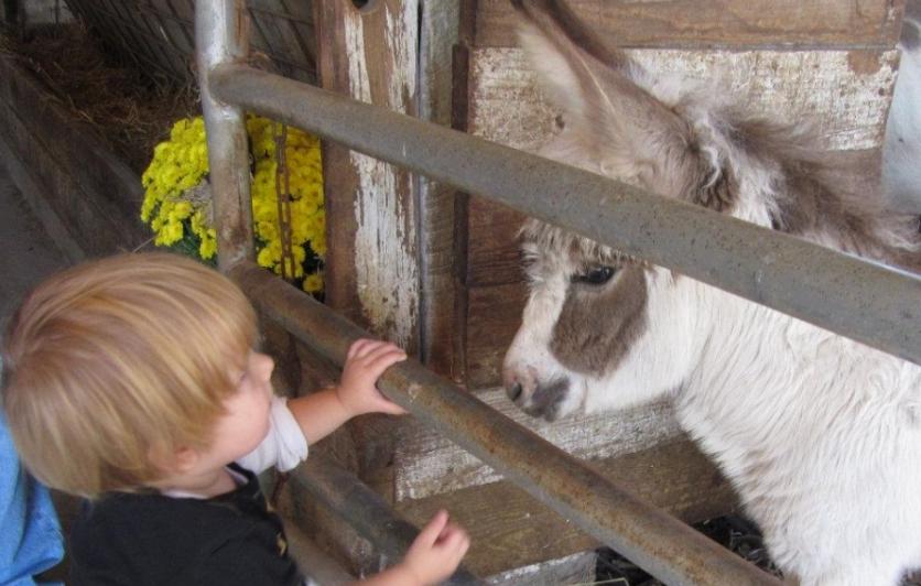 Smith Family Farms