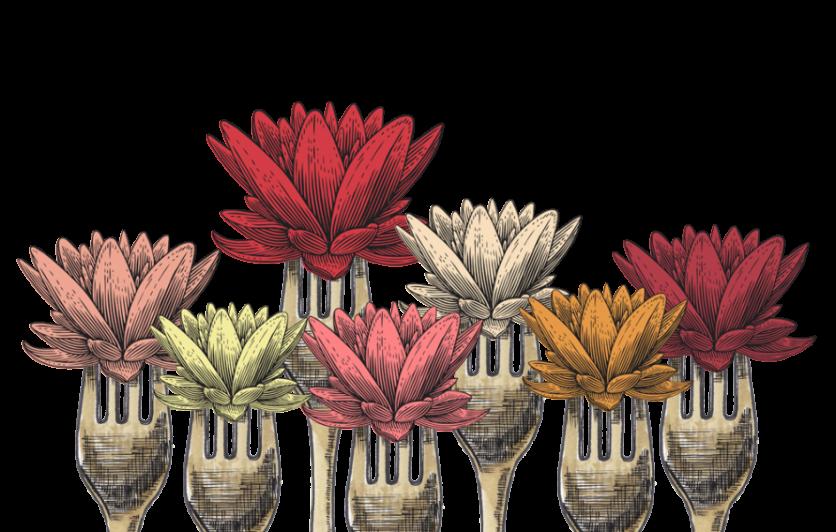 Edible Lotus