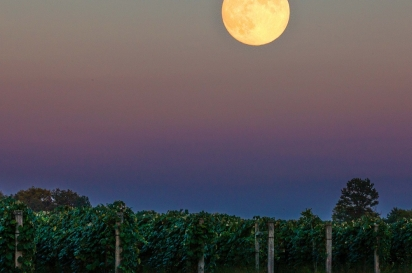 Country Moon Winery, Vintage indiana, Edible Indy
