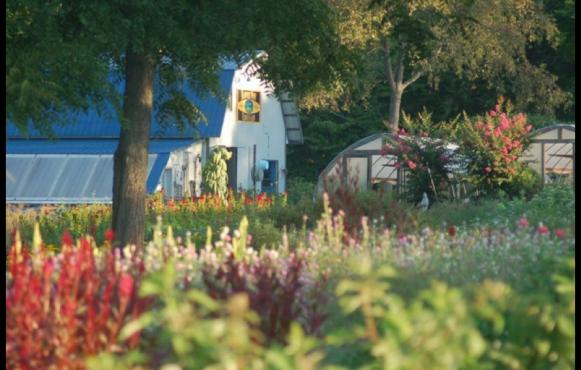 Harvest Moon Flower Farm