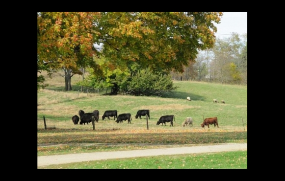 Royer Farm Fresh Beef, Lamb & Pork