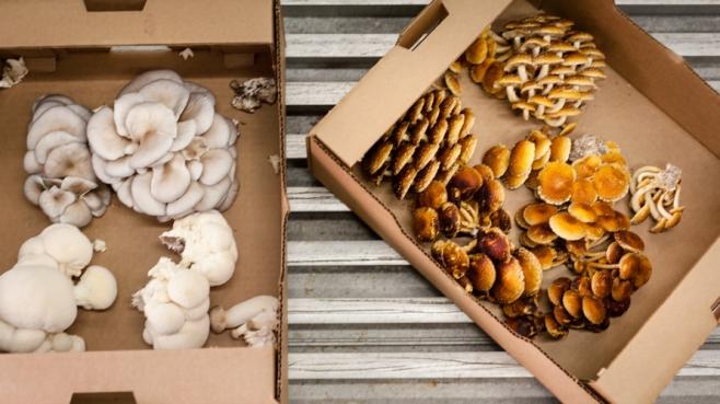 Mushrooms in a box