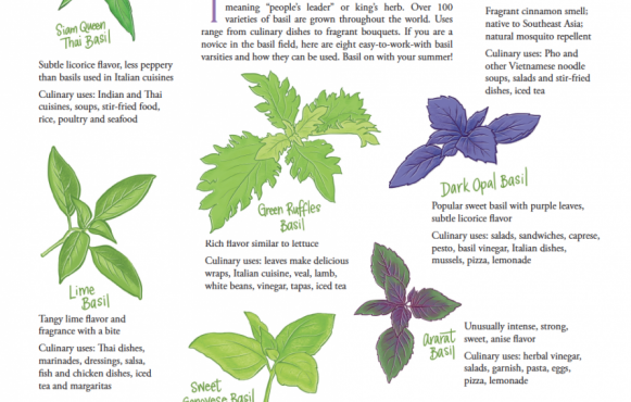 All About Basil