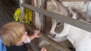 A Young Boy Petting a Farm Animal