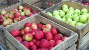 Wild's Apple Farm